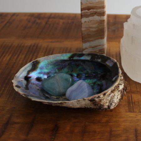 Regenboog Abalone Schelp